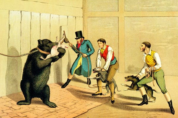 'Bear Baiting', by Henry Thomas Alken (188-1851), published by Thomas McLean, 1820