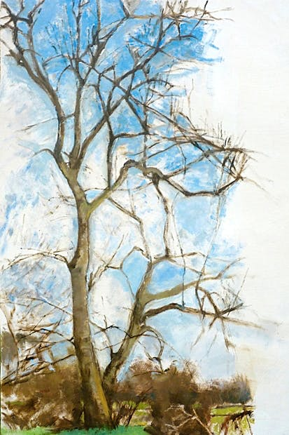 'Ash tree in Winter, 2010–13