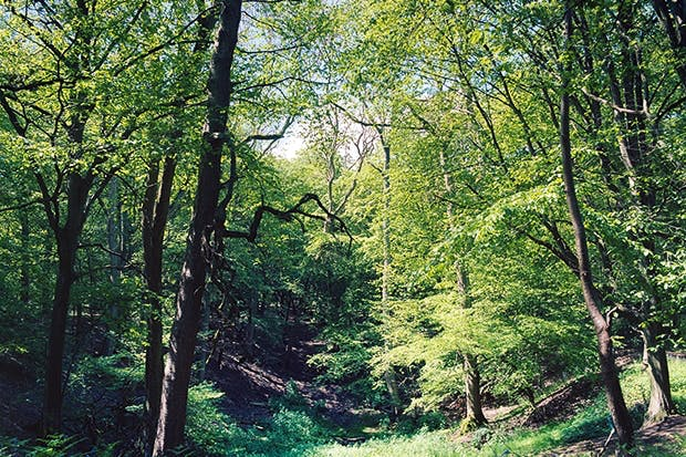 A small valley or hollow, usually wooded, known as a 'dell' (unchanged from Old English) or 'dingle'.