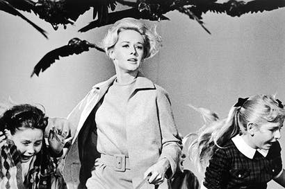 Tippi Hedren helps save schoolchildren in The Birds. Hitchcock confided to François Truffaut that he'd had 'some emotional problems' with Hedren during the shoot. For the final scene, live birds were attached to Hedren's clothes. The actress became increasingly hysterical over the course of the week it took to film it, and when a bird finally went for her eyes, she collapsed