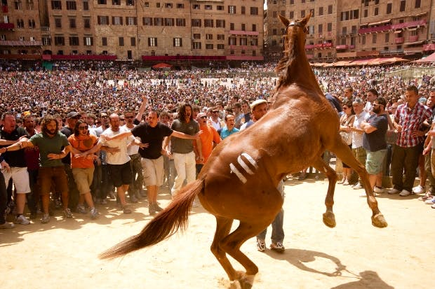Still from the documentary 'Palio': a medieval rite at once nonsensical and puerile, and yet profoundly alive and meaningful