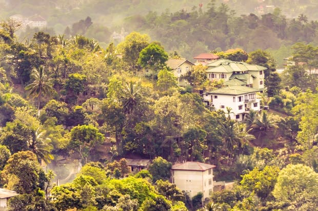 Kandy mountains: buzzing bees and cigarette trees, pretty much