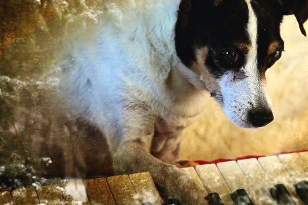 Hound of love: Lolabelle gets old and Lolabelle goes blind and keyboards are laid out on the floor so that she can bash them with her paws, and enjoy the sounds