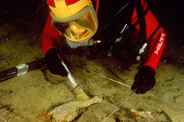 Buried treasure: an archaeologist diver brushes clear a bovid jaw discovered in Aboukir Bay