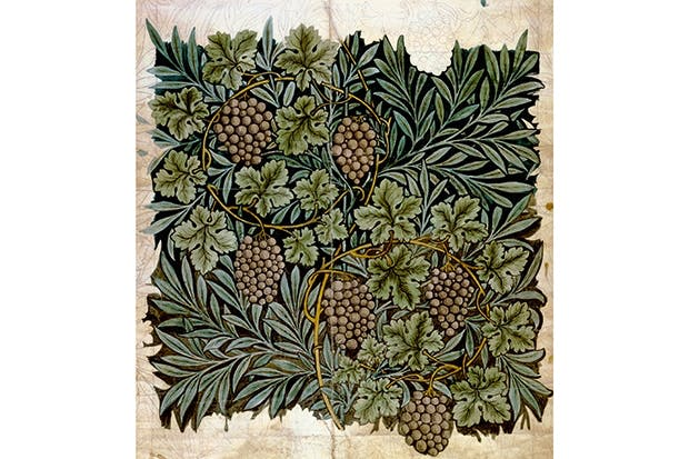 Designs for wallpaper with a vine pattern by William Morris