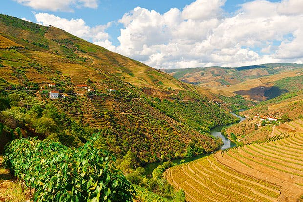 Don't fear to tread: vineyards in the Douro Valley