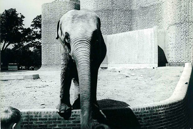 The Elephant House at London Zoo, designed in 1964 by Casson Conder Partnership