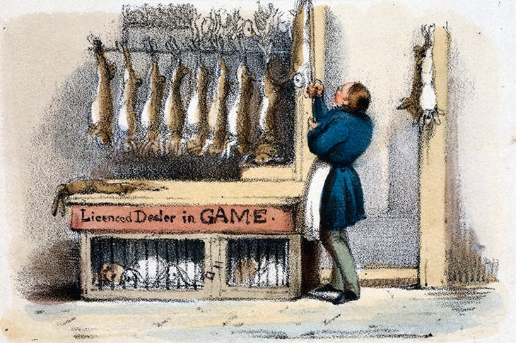 The game butcher, with dead rabbits and live, caged ones beneath. (Scene from the 1840s)