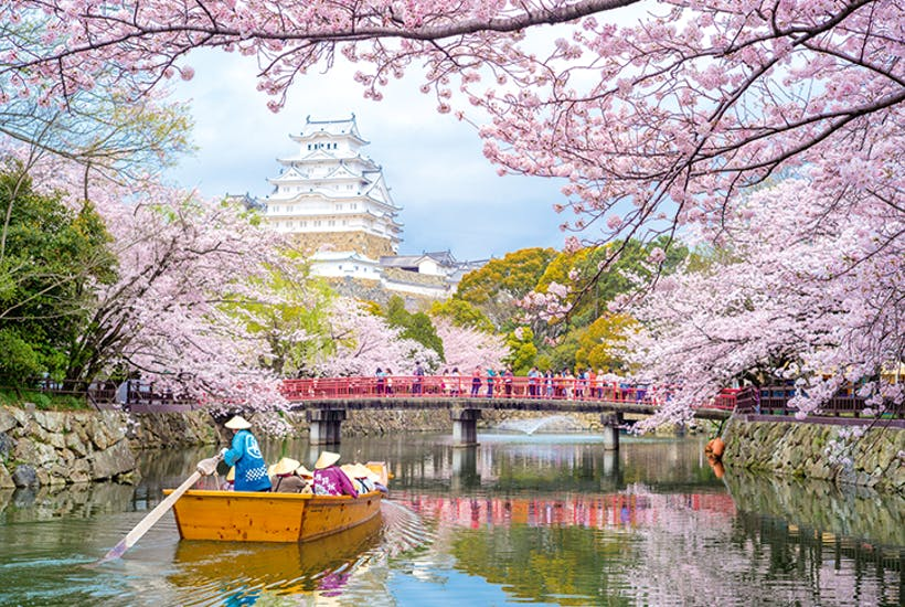 Party Time Blossoms At Himeji Castle In Japan