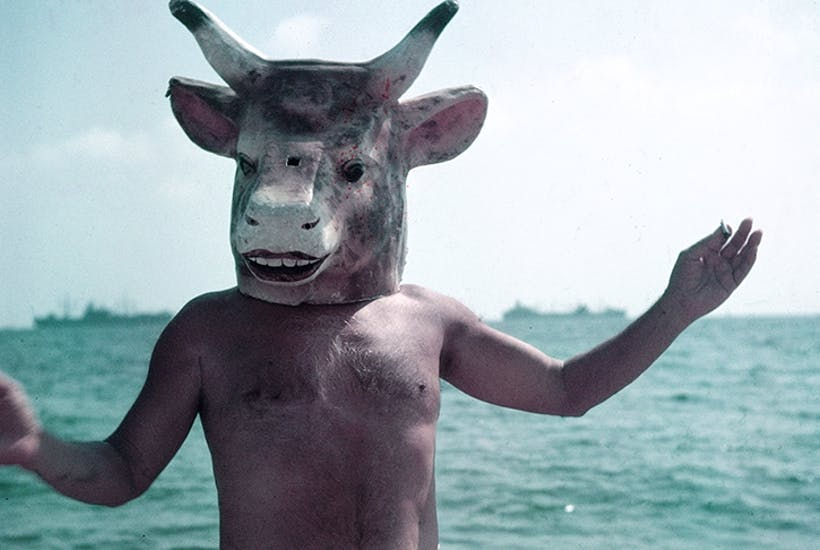 A load of old bull: Picasso wearing a bull's head intended for bullfighters' training, Cannes, 1959