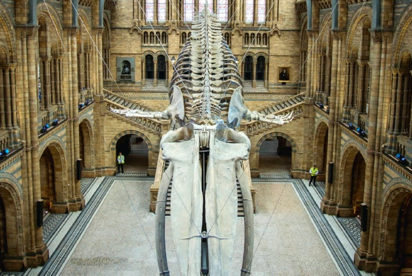 the newly refurbished natural history museum is glorious the spectator