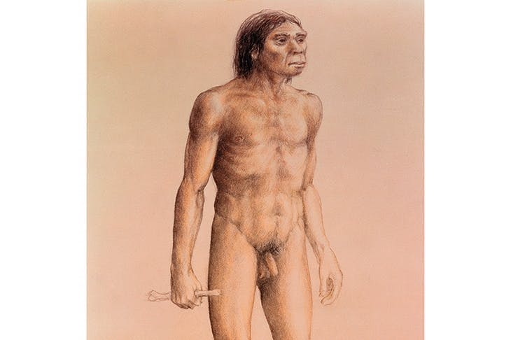 Our hero, homo erectus
