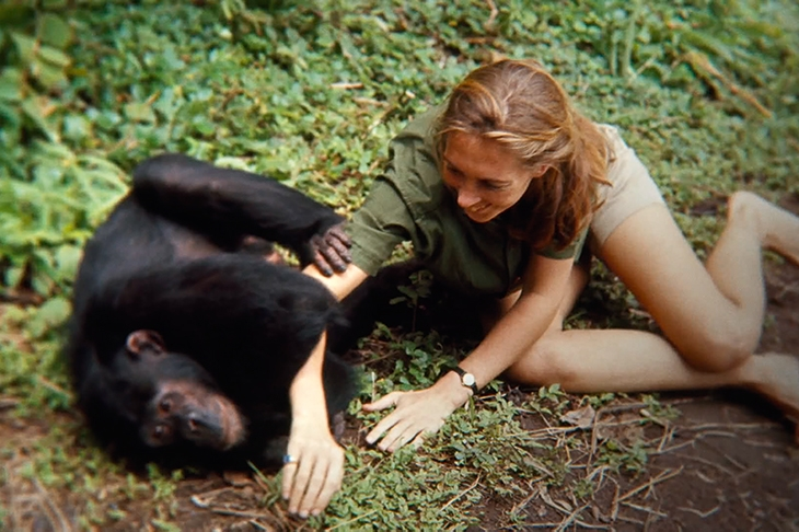 An exceptional new film about Jane Goodall unearths a remarkable love story