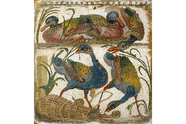 Birds as a resource, as pets, or for sport: pheasant and waterfowl in mosaics from Carthage and Rome