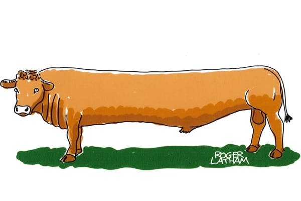 Stretch Limousin