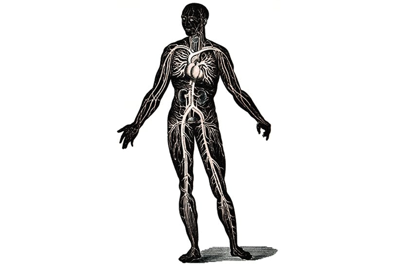 Illustration depicting the circulation of the blood