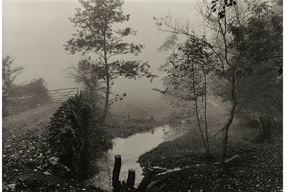 Apocalypse now: 'Wood near My House, Somerset', c.1991, by Don McCullin