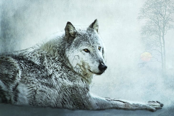 Discover your inner wolf: love your family, value your home, respect your elders, be altruistic, and have fun, says Elli Radinger