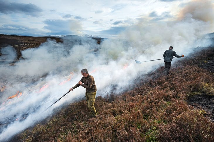Gamekeepers burn heather to encourage new growth for red grouse to feed on (Getty)
